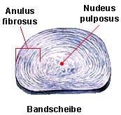 Anatomie der Bandscheibe