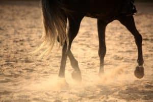 Pferdesalbe für Pferde
